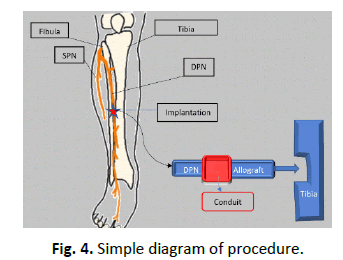 Orthopaedics-Trauma-Surgery-Related-Research-Simple-diagram